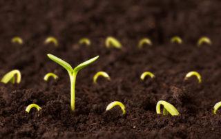 seminte-ce plantezi aia culegi