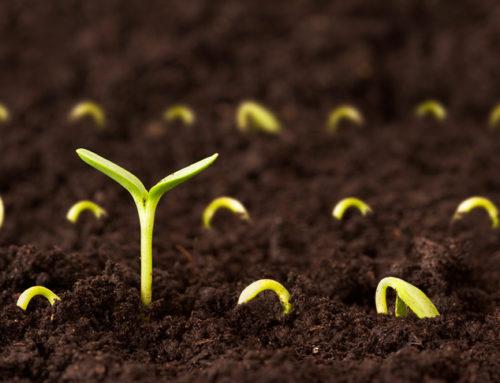 Excursie cu peripeții sau Ce plantezi aia culegi
